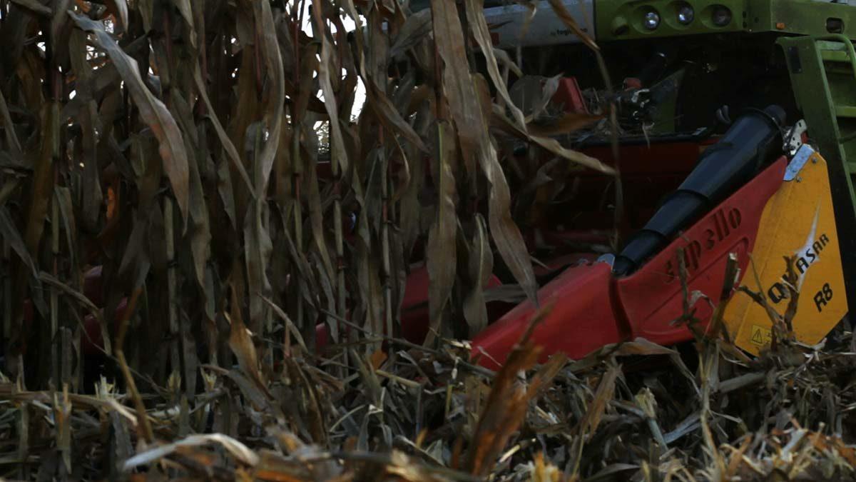Совершенная кукурузная жатка